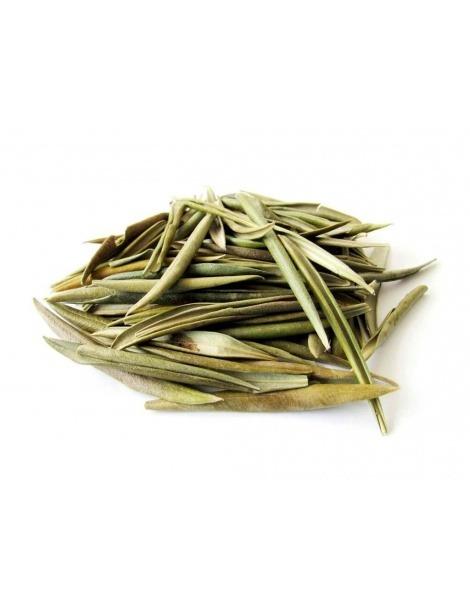 Chá de Folhas de Oliveira (Olea europaea)