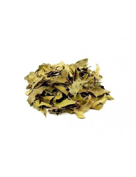 Chá de Espinheira Santa (Maytenus ilicifolia)