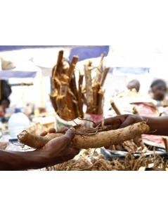 Pau de Cabinda em Saquetas