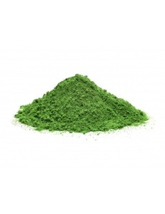 Moringa Oleifera Pulver