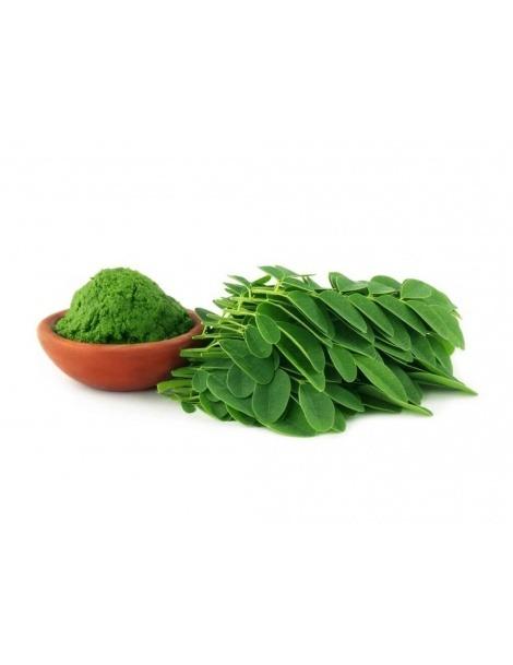 Moringa Oleifera en polvo - 100grs